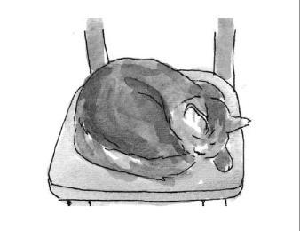 card 1 cat sleeping